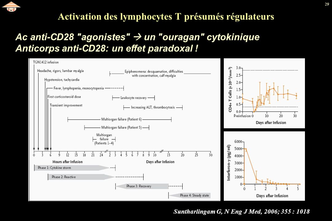 29 Activation des lymphocytes T présumés régulateurs Suntharlingam G, N Eng J Med, 2006; 355 : 1018 Ac anti-CD28