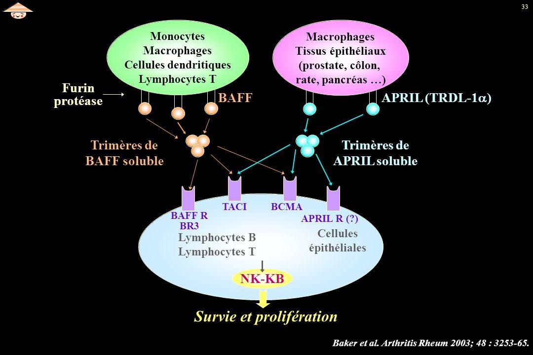 33 Monocytes Macrophages Cellules dendritiques Lymphocytes T Macrophages Tissus épithéliaux (prostate, côlon, rate, pancréas …) Lymphocytes B Lymphocy
