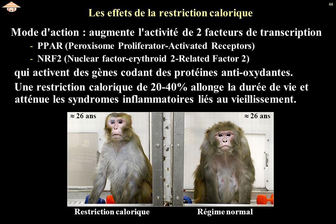 46 Les effets de la restriction calorique Mode d'action : augmente l'activité de 2 facteurs de transcription -PPAR (Peroxisome Proliferator-Activated