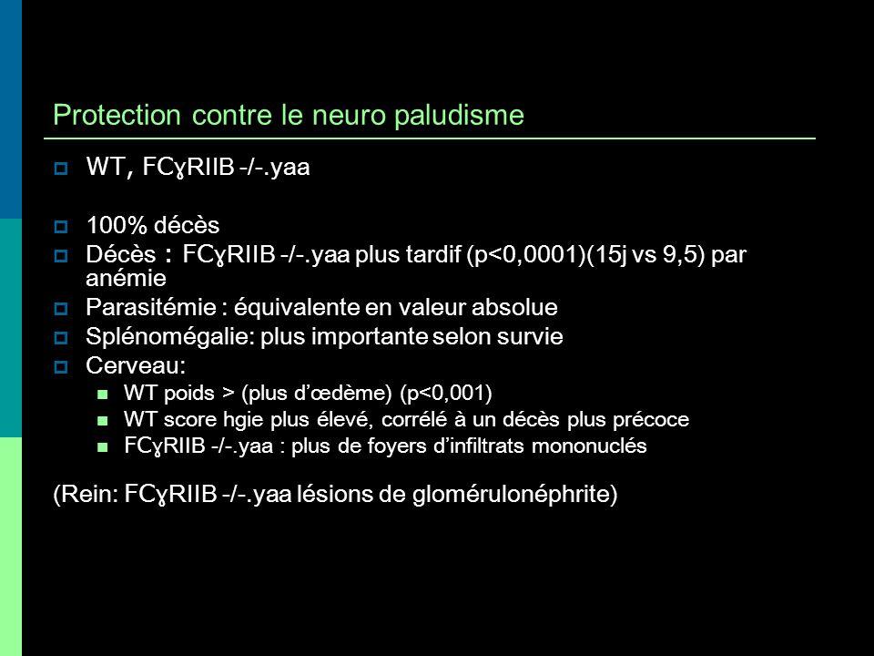 Protection contre le neuro paludisme WT, FC ɣRIIB -/-.yaa 100% décès Décès : FC ɣRIIB -/-.yaa plus tardif (p<0,0001)(15j vs 9,5) par anémie Parasitémi