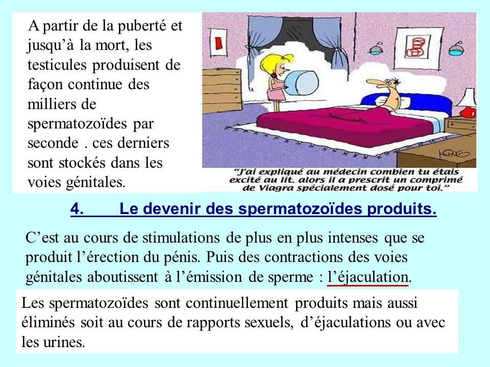 B.Le fonctionnement des organes génitaux chez la femme.