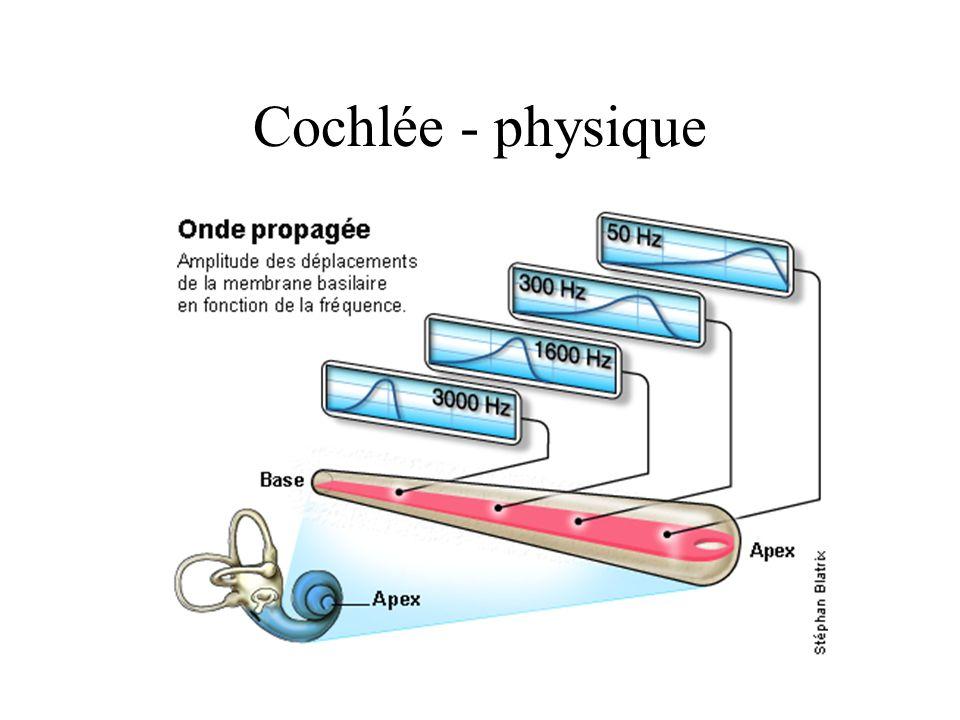 Cochlée - physique