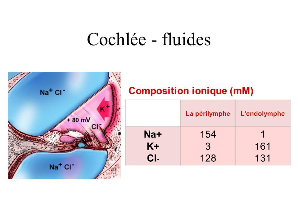 Cochlée - fluides Composition ionique (mM) La périlympheL'endolymphe Na+ K+ Cl - 154 3 128 1 161 131