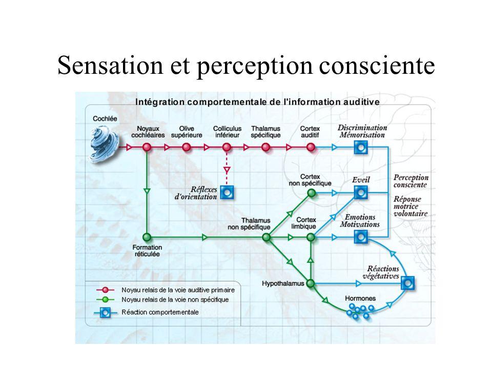 Sensation et perception consciente