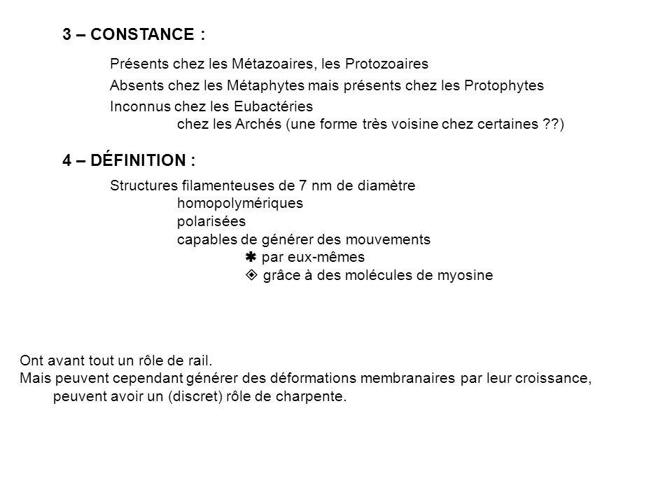 5 - MICROSCOPIE PHOTONIQUE : Immunofluorescence Actine en rouge.