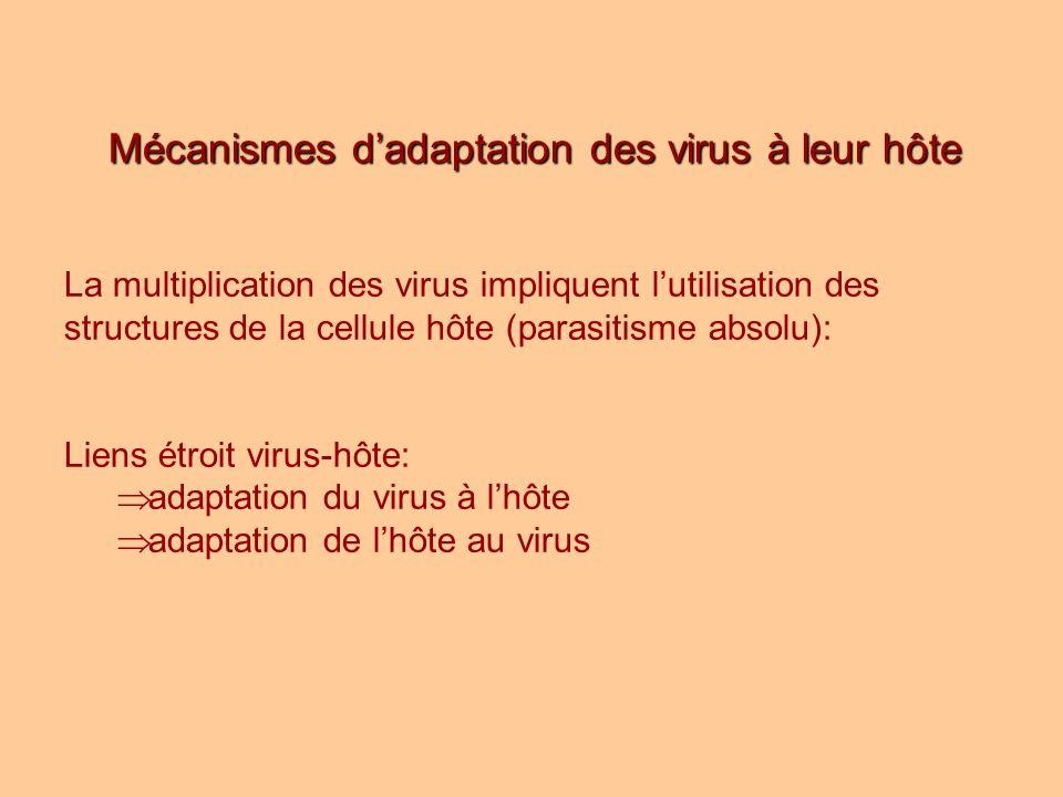 Mécanismes dadaptation des virus à leur hôte La multiplication des virus impliquent lutilisation des structures de la cellule hôte (parasitisme absolu