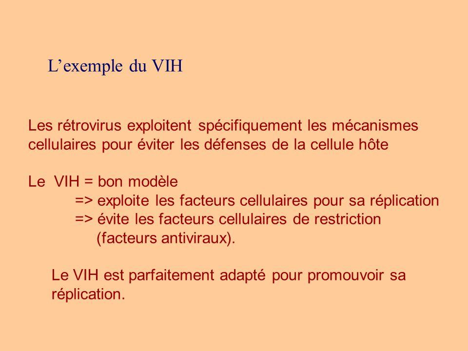 Lexemple du VIH Les rétrovirus exploitent spécifiquement les mécanismes cellulaires pour éviter les défenses de la cellule hôte Le VIH = bon modèle =>