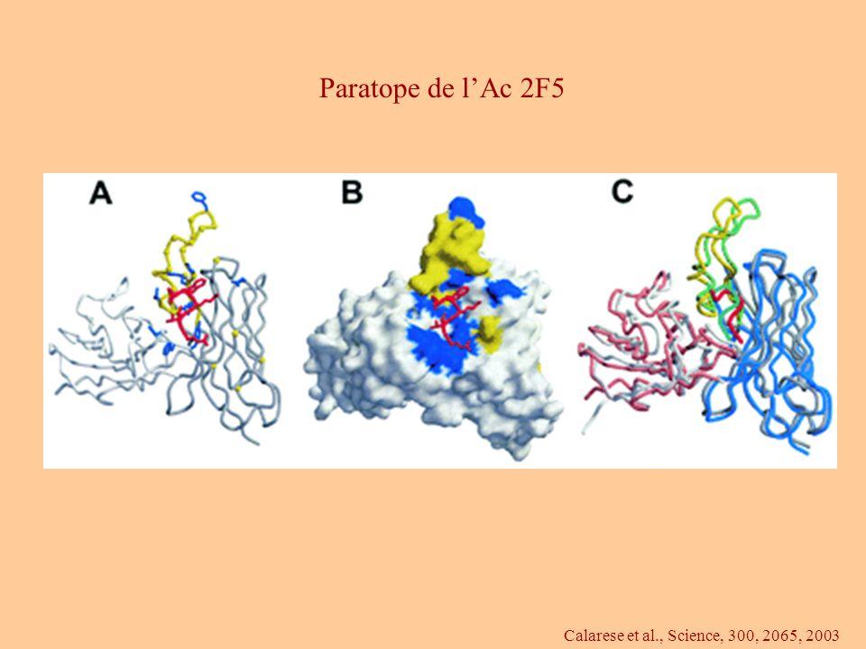 Calarese et al., Science, 300, 2065, 2003 Paratope de lAc 2F5