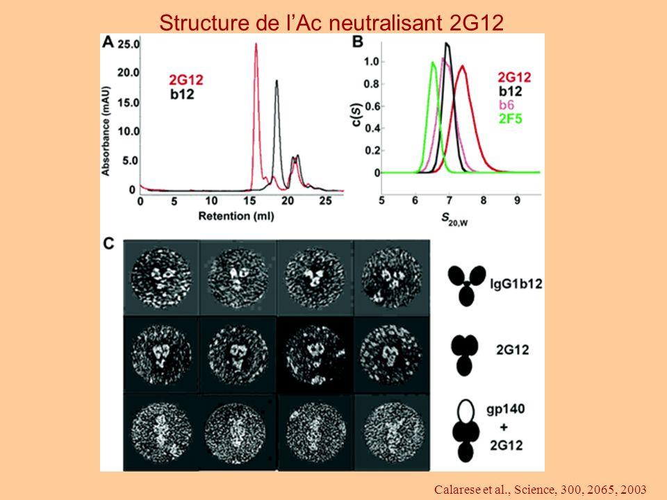 Calarese et al., Science, 300, 2065, 2003 Structure de lAc neutralisant 2G12