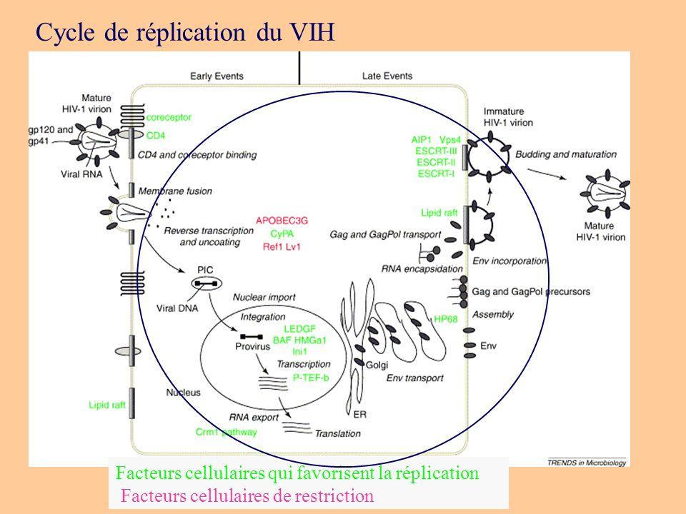 Cycle de réplication du VIH Facteurs cellulaires qui favorisent la réplication Facteurs cellulaires de restriction