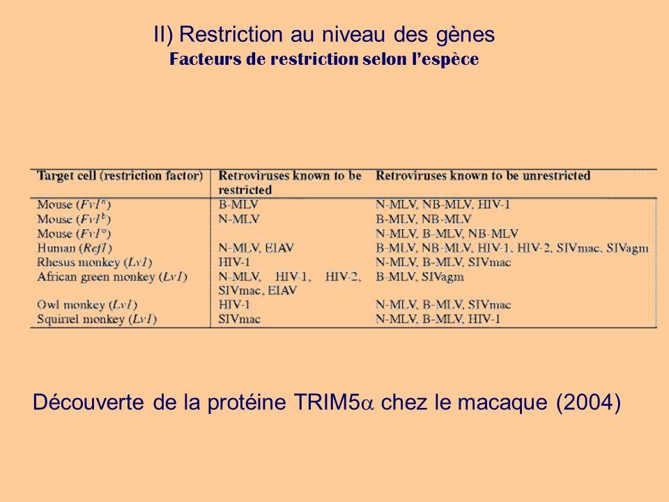 II) Restriction au niveau des gènes Facteurs de restriction selon lespèce Découverte de la protéine TRIM5 chez le macaque (2004)