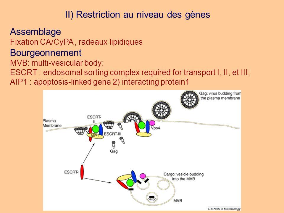 II) Restriction au niveau des gènes Assemblage Fixation CA/CyPA, radeaux lipidiques Bourgeonnement MVB: multi-vesicular body; ESCRT : endosomal sortin