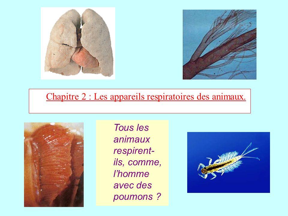 Chapitre 2 : Les appareils respiratoires des animaux. Tous les animaux respirent- ils, comme, lhomme avec des poumons ?