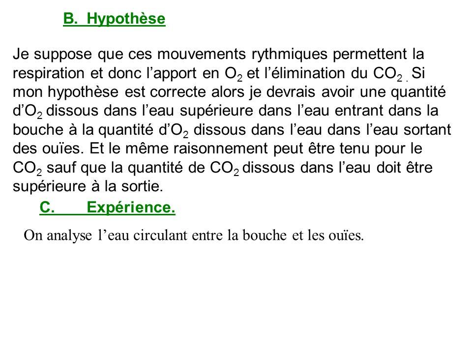 B.Hypothèse Je suppose que ces mouvements rythmiques permettent la respiration et donc lapport en O 2 et lélimination du CO 2. Si mon hypothèse est co