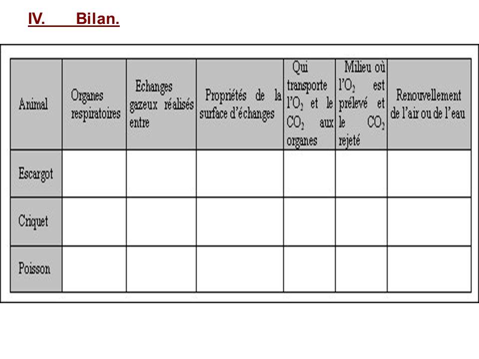 IV.Bilan.