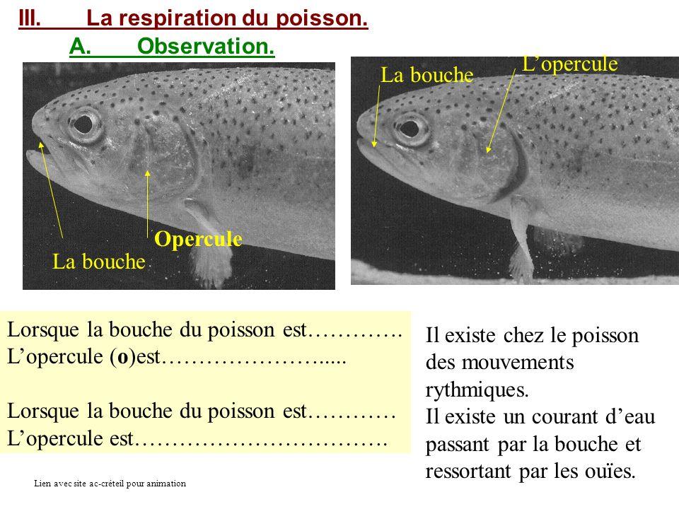 III.La respiration du poisson. A.Observation. Lorsque la bouche du poisson est…………. Lopercule (o)est…………………..... Lorsque la bouche du poisson est…………