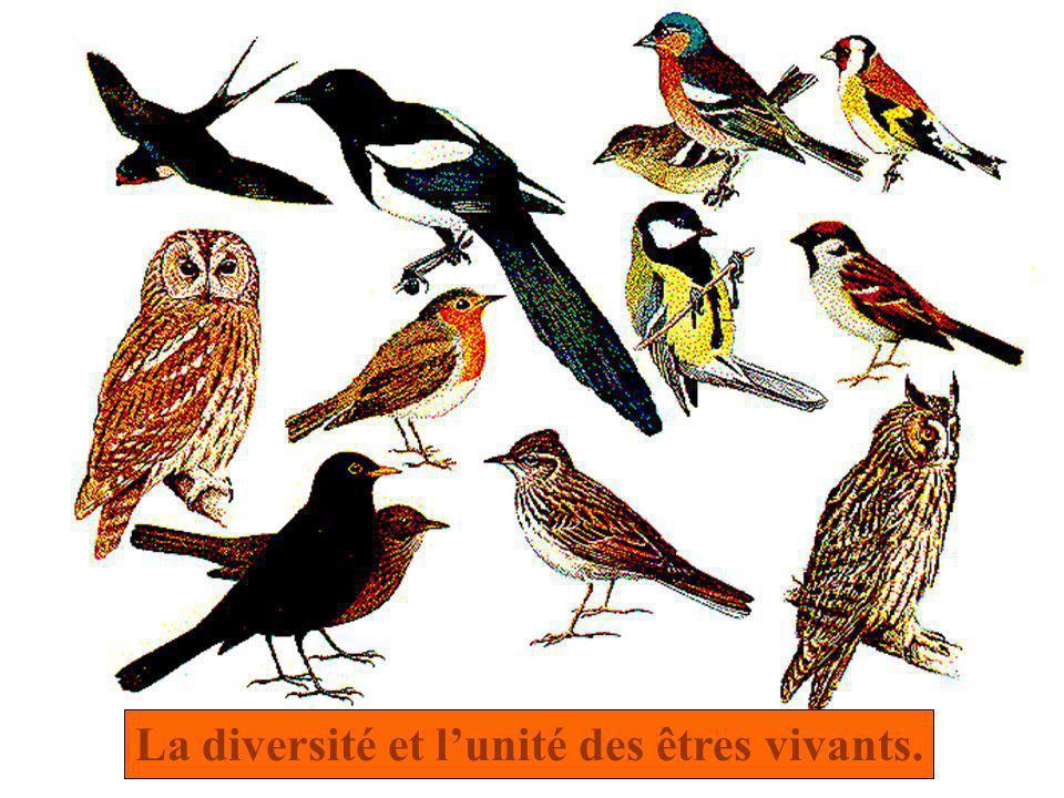 La diversité et lunité des êtres vivants.