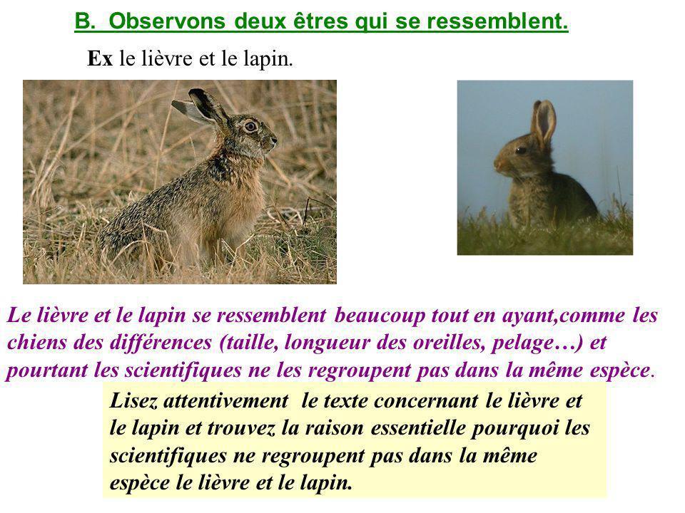 B.Observons deux êtres qui se ressemblent.Ex le lièvre et le lapin.