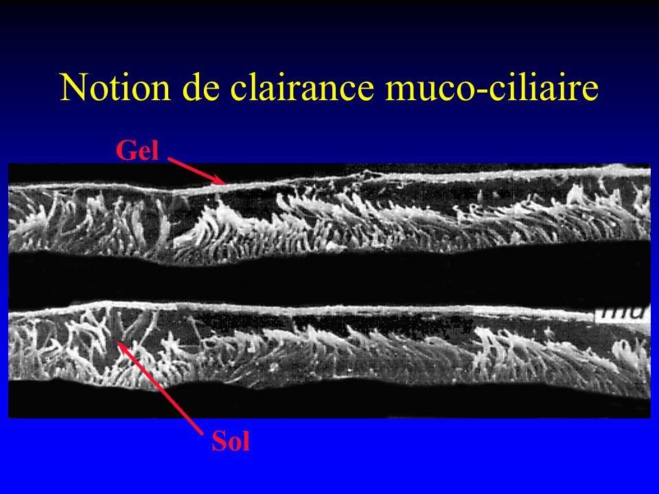 Notion de clairance muco-ciliaire Gel Sol