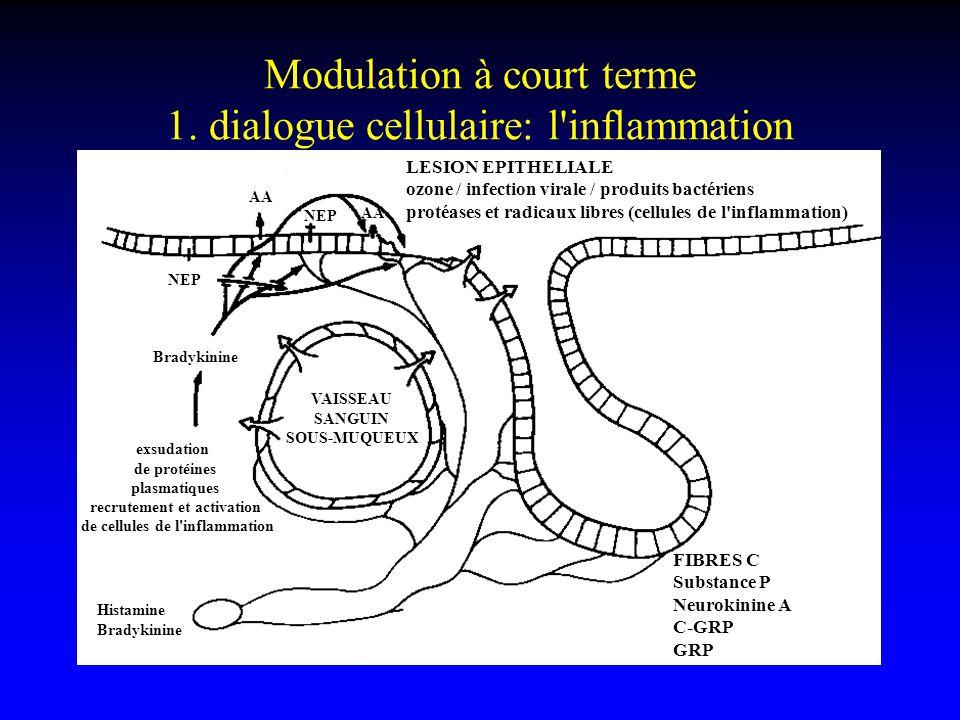 Modulation à court terme 1. dialogue cellulaire: l'inflammation neurogénique FIBRES C Substance P Neurokinine A C-GRP GRP LESION EPITHELIALE ozone / i