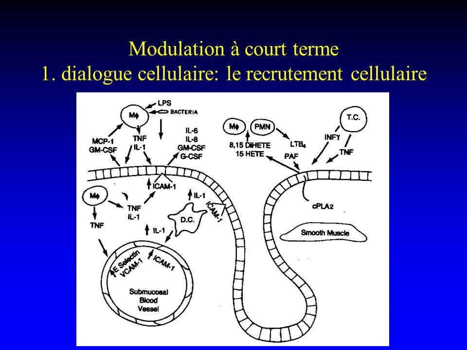 Modulation à court terme 1. dialogue cellulaire: le recrutement cellulaire