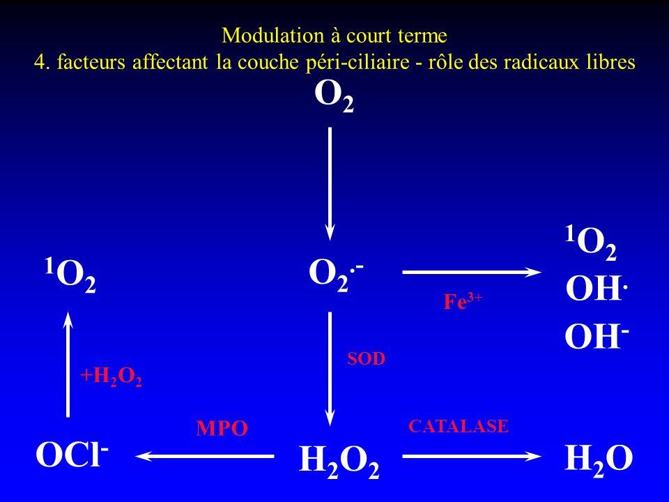 Modulation à court terme 4. facteurs affectant la couche péri-ciliaire - rôle des radicaux libres O2O2 H2OH2O H2O2H2O2 OCl - 1O21O2 O 2.- OH - OH. 1O2