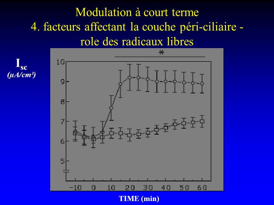 Modulation à court terme 4. facteurs affectant la couche péri-ciliaire - role des radicaux libres TIME (min) I sc (µA/cm²)
