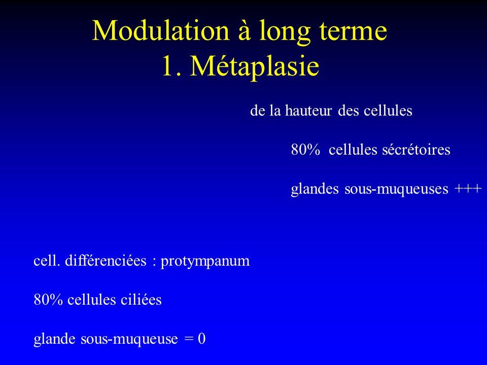 Modulation à long terme 1. Métaplasie cell. différenciées : protympanum 80% cellules ciliées glande sous-muqueuse = 0 de la hauteur des cellules 80% c