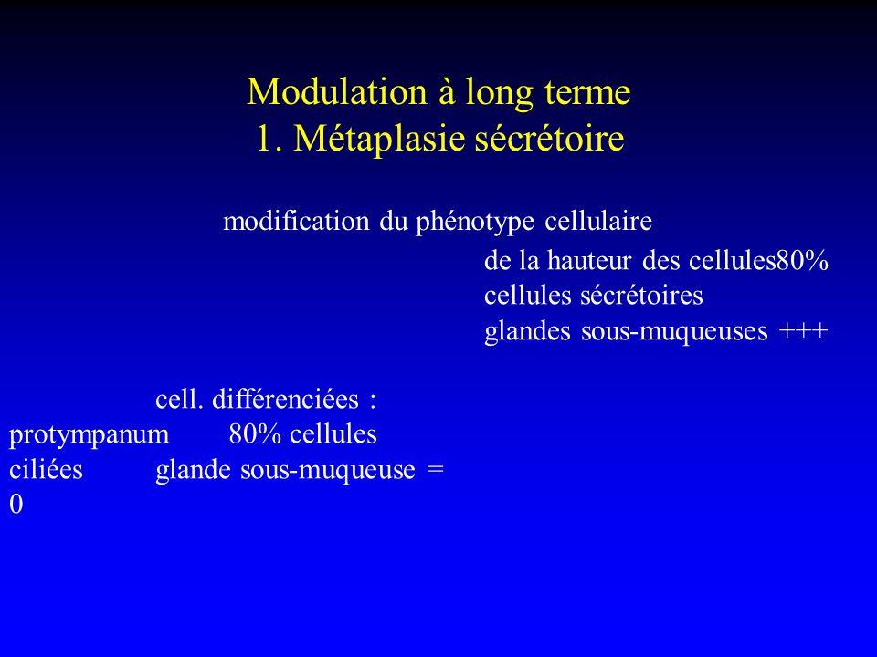 Modulation à long terme 1. Métaplasie sécrétoire modification du phénotype cellulaire cell. différenciées : protympanum80% cellules ciliéesglande sous