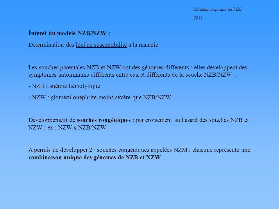 Modèles animaux de MAI 2011 I ntérêt du modèle NZB/NZW : Détermination des loci de susceptibilité à la maladie Les souches parentales NZB et NZW ont d