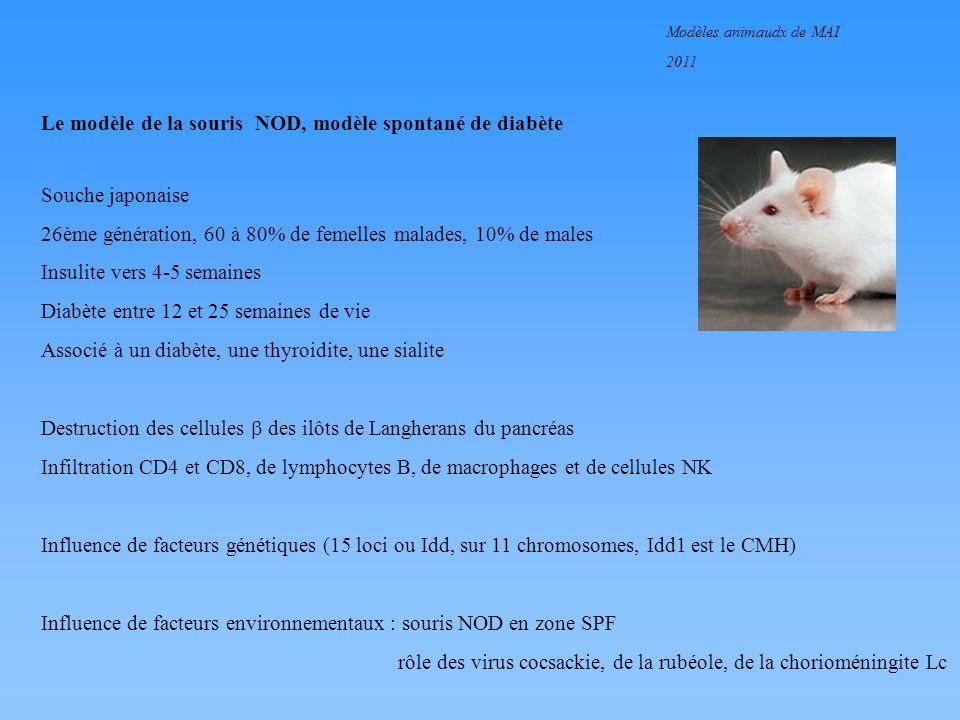 Modèles animaudx de MAI 2011 Le modèle de la souris NOD, modèle spontané de diabète Souche japonaise 26ème génération, 60 à 80% de femelles malades, 1