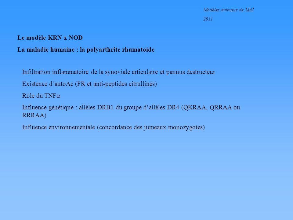 Modèles animaux de MAI 2011 Le modèle KRN x NOD La maladie humaine : la polyarthrite rhumatoide Infiltration inflammatoire de la synoviale articulaire