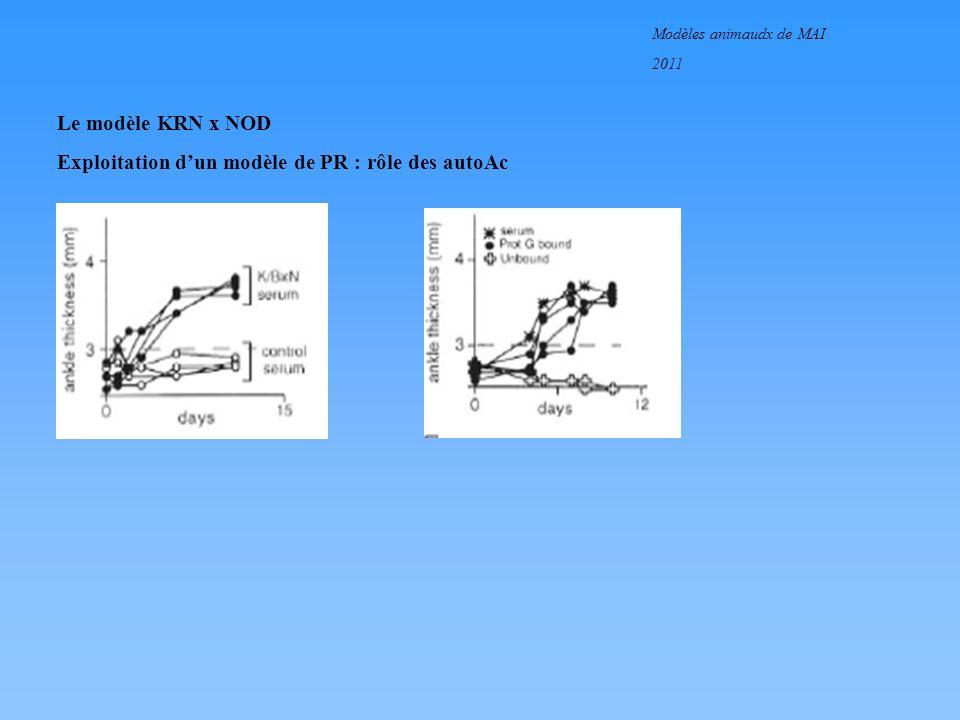 Modèles animaudx de MAI 2011 Le modèle KRN x NOD Exploitation dun modèle de PR : rôle des autoAc