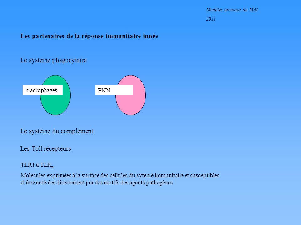 Modèles animaux de MAI 2011 Les partenaires de la réponse immunitaire innée Le système phagocytaire macrophages PNN Le système du complément Les Toll