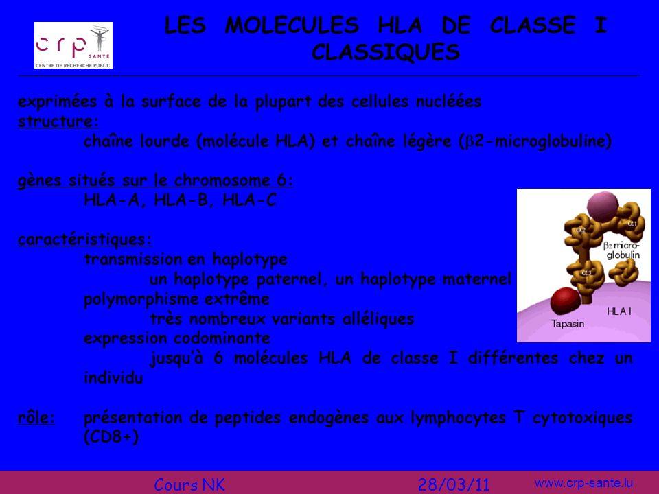 www.crp-sante.lu LES MOLECULES HLA DE CLASSE I CLASSIQUES exprimées à la surface de la plupart des cellules nucléées structure: chaîne lourde (molécul