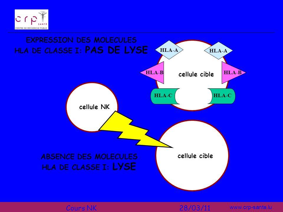 www.crp-sante.lu cellule NK cellule cible HLA-A EXPRESSION DES MOLECULES HLA DE CLASSE I: PAS DE LYSE ABSENCE DES MOLECULES HLA DE CLASSE I: LYSE HLA-