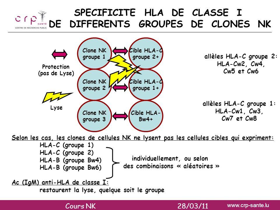 www.crp-sante.lu Selon les cas, les clones de cellules NK ne lysent pas les cellules cibles qui expriment: HLA-C (groupe 1) HLA-C (groupe 2) HLA-B (gr