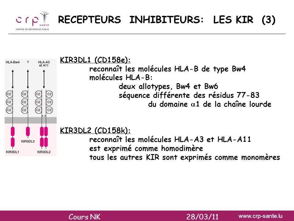 www.crp-sante.lu RECEPTEURS INHIBITEURS: LES KIR (3) KIR3DL1 (CD158e): reconnaît les molécules HLA-B de type Bw4 molécules HLA-B: deux allotypes, Bw4