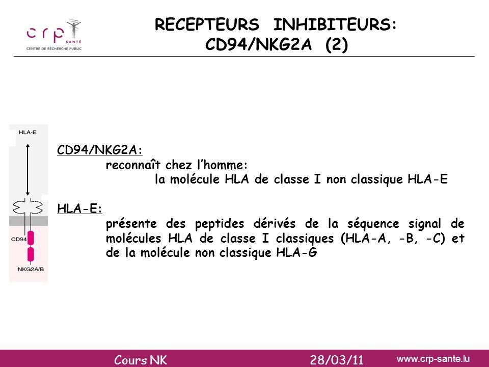 www.crp-sante.lu RECEPTEURS INHIBITEURS: CD94/NKG2A (2) CD94/NKG2A: reconnaît chez lhomme: la molécule HLA de classe I non classique HLA-E HLA-E: prés