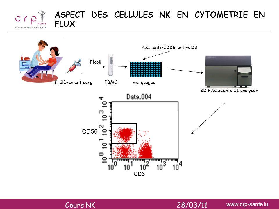 www.crp-sante.lu CELLULES NK DANS LES GANGLIONS LYMPHATIQUES 1-7 % des cellules mononucléées sont des cellules NK contiennent 40% de tous les lymphocytes contre 2 % pour le sang donc cellules NK beaucoup plus nombreuses que dans le sang 75-95 % de ces cellules NK sont CD56 bright (et CD16-KIR-NCR-) deviennent rapidement KIR+NCR+ et cytotoxiques sous linfluence de lIL-2 Cours NK 28/03/11