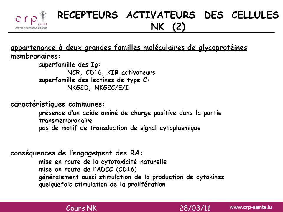 www.crp-sante.lu RECEPTEURS ACTIVATEURS DES CELLULES NK (2) appartenance à deux grandes familles moléculaires de glycoprotéines membranaires: superfam