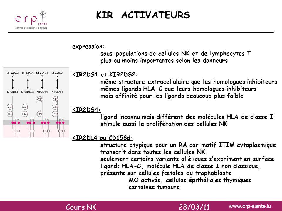 www.crp-sante.lu KIR ACTIVATEURS expression: sous-populations de cellules NK et de lymphocytes T plus ou moins importantes selon les donneurs KIR2DS1