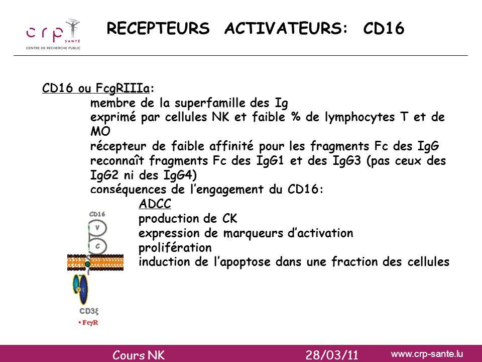 www.crp-sante.lu RECEPTEURS ACTIVATEURS: CD16 : CD16 ou FcgRIIIa: membre de la superfamille des Ig exprimé par cellules NK et faible % de lymphocytes