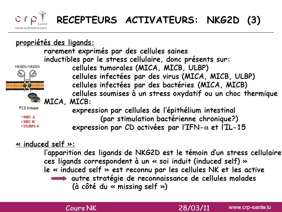 www.crp-sante.lu RECEPTEURS ACTIVATEURS: NKG2D (3) propriétés des ligands: rarement exprimés par des cellules saines inductibles par le stress cellula