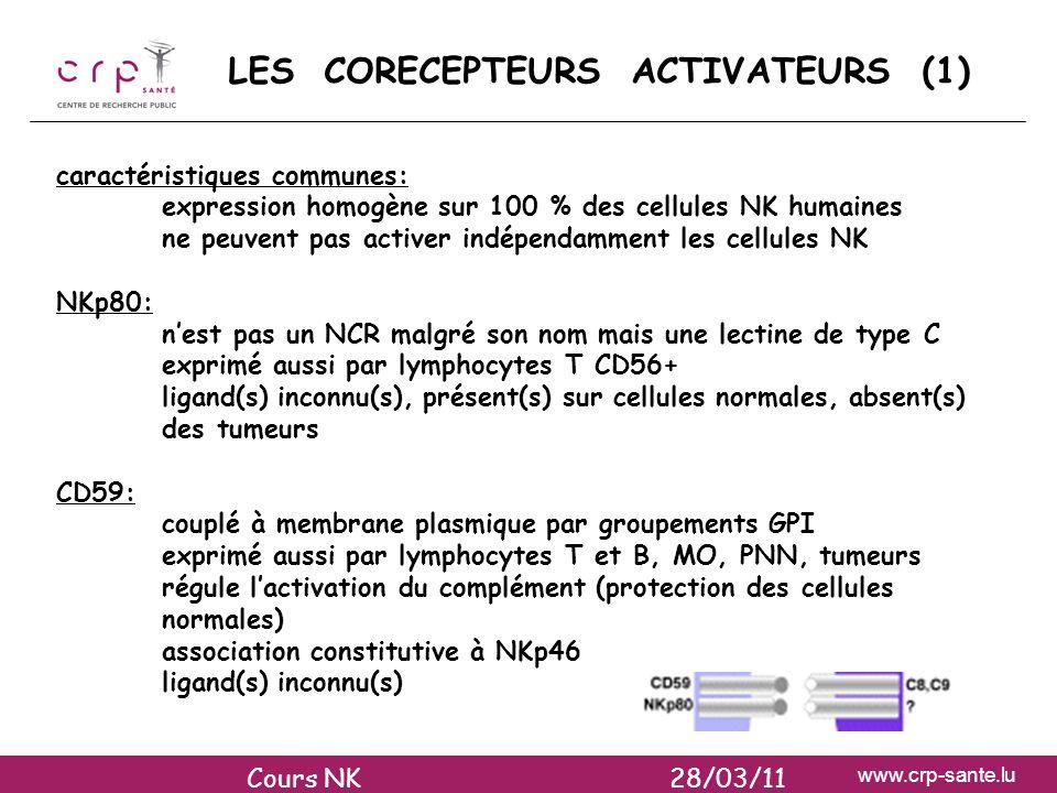 www.crp-sante.lu LES CORECEPTEURS ACTIVATEURS (1) caractéristiques communes: expression homogène sur 100 % des cellules NK humaines ne peuvent pas act