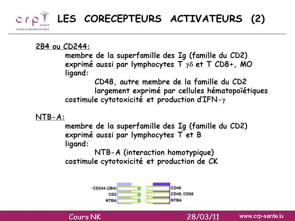 www.crp-sante.lu LES CORECEPTEURS ACTIVATEURS (2) 2B4 ou CD244: membre de la superfamille des Ig (famille du CD2) exprimé aussi par lymphocytes T et T