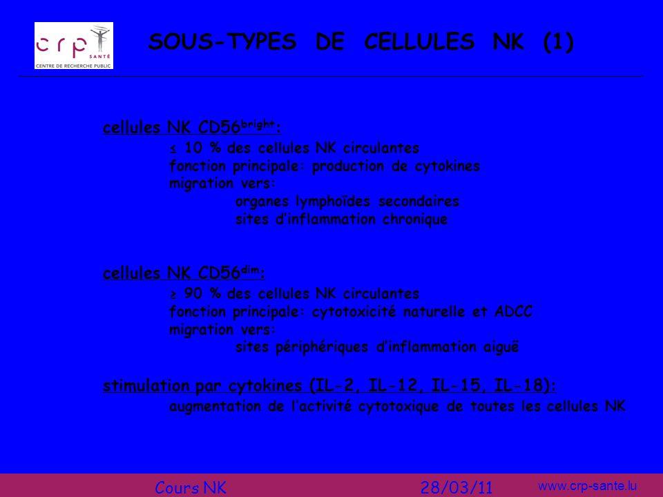 www.crp-sante.lu SOUS-TYPES DE CELLULES NK (1) cellules NK CD56 bright : 10 % des cellules NK circulantes fonction principale: production de cytokines