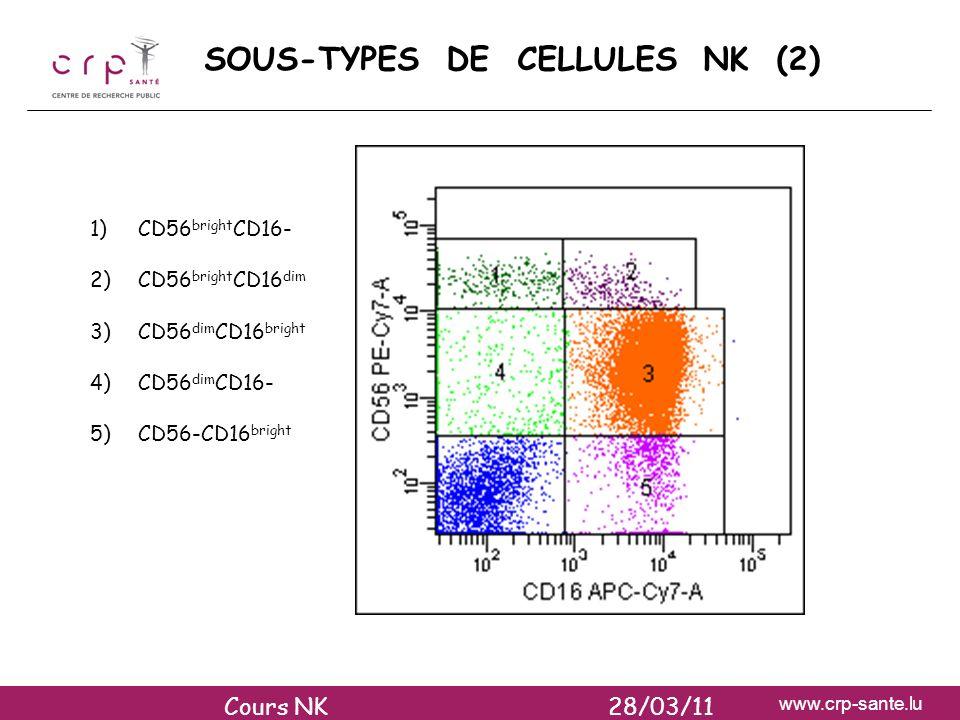 www.crp-sante.lu SOUS-TYPES DE CELLULES NK (2) 1)CD56 bright CD16- 2)CD56 bright CD16 dim 3)CD56 dim CD16 bright 4)CD56 dim CD16- 5)CD56-CD16 bright C