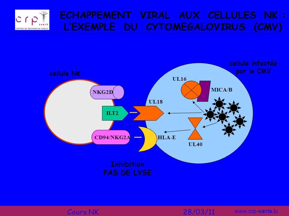 www.crp-sante.lu cellule NK cellule infectée par le CMV UL40 HLA-ECD94/NKG2A UL18 ILT2 _ Inhibition PAS DE LYSE _ ECHAPPEMENT VIRAL AUX CELLULES NK :
