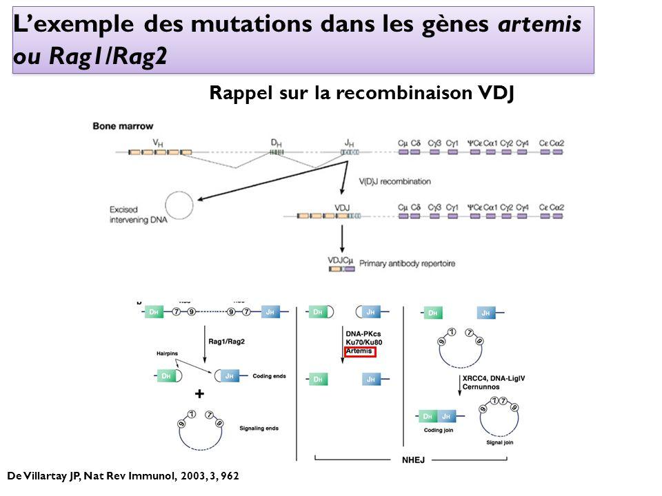 Lexemple des mutations dans les gènes artemis ou Rag1/Rag2 Rappel sur la recombinaison VDJ De Villartay JP, Nat Rev Immunol, 2003, 3, 962